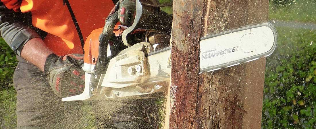 potatura alberi imola
