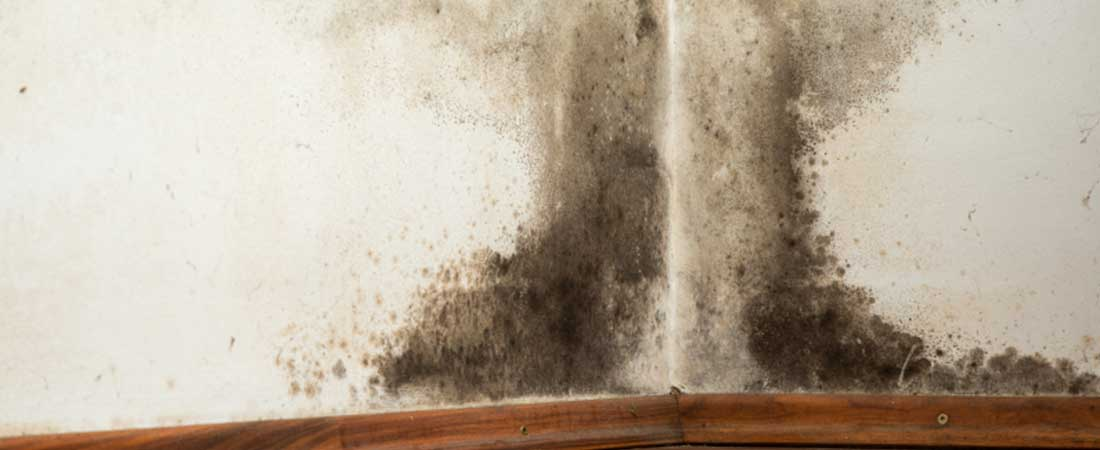 umidità nei muri